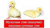 Ешь Российское - Русский пармезан. Истринская сыроварня - YouTube