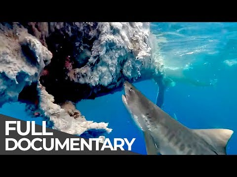 Toxins in Humpback Whales | Ocean Vet | S01 E09 | Free Documentary