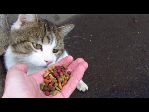 Feeding cat on the street. Cute cat on snow
