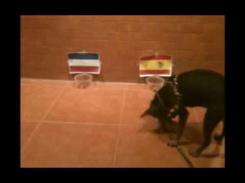 Champion World Cup 2010  หมีฟันธง (สเปน VS ฮอลแลนด์)