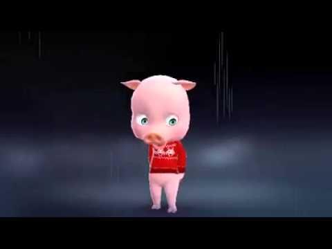 Videos engraçados : O porquinho 🐽🐽