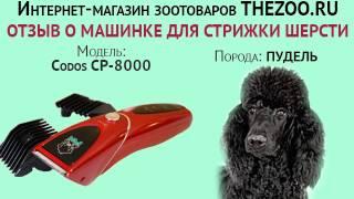 Отзыв: Надежда Султанова, машинка для стрижки шерсти Codos CP-8000, порода - пудель