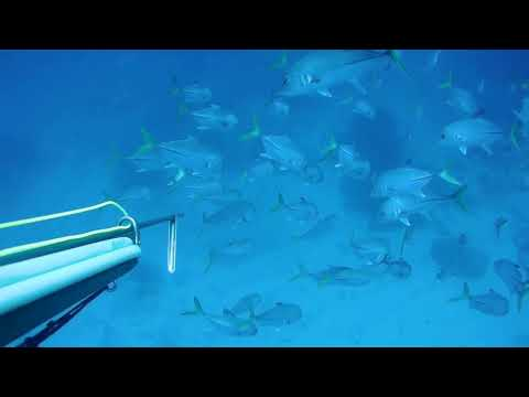 Spearfishing FWI Martinique
