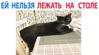 Приколы и Мемы с Котами. Смешные и Милые МЕМЧИКИ про Котов