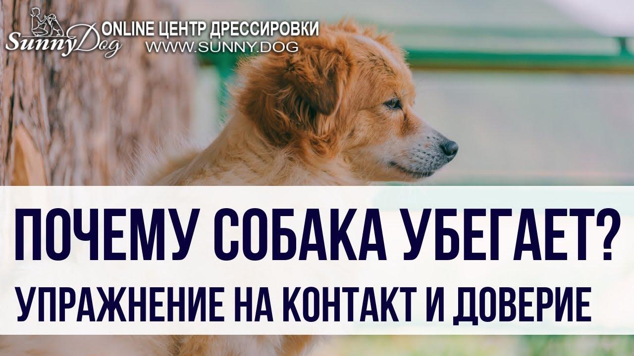 Почему собака убегает? Что необходимо сделать, чтобы собака от вас не убегала?
