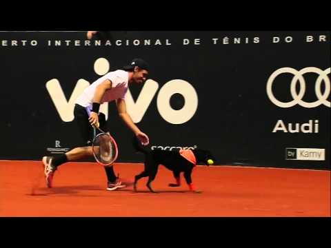 Dogs Entertain As Ball Dogs In Sao Paulo