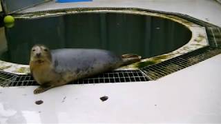 Singing Grey Seals Compilation