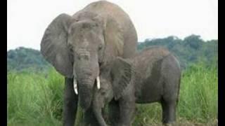 Me & The Elephant - Gene Cotton