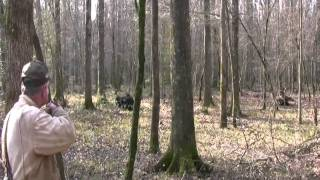 Pissed Off Charging Boar!  Wild Hog Hunting  -  Boar Hunting