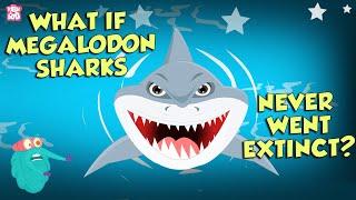 What If Megalodon Sharks Never Went Extinct? | The Megalodon | The Dr Binocs Show | Peekaboo Kidz