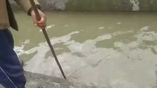 Barot trout fish farm , video by-  Rajat Thapa , sidhbari ( H.P )