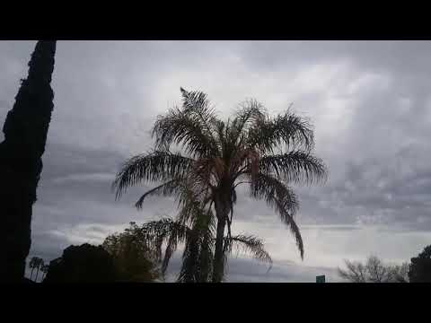 Queen Palm Tree Dying Mesa AZ 480 969 8808 Warners Tree Surgery UD04242019
