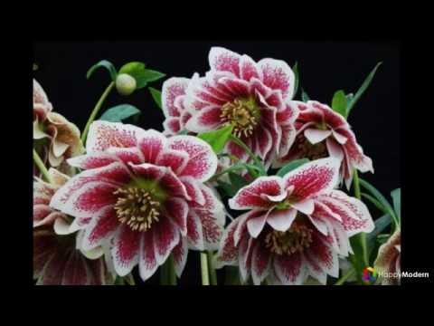 Самые первые весенние цветы