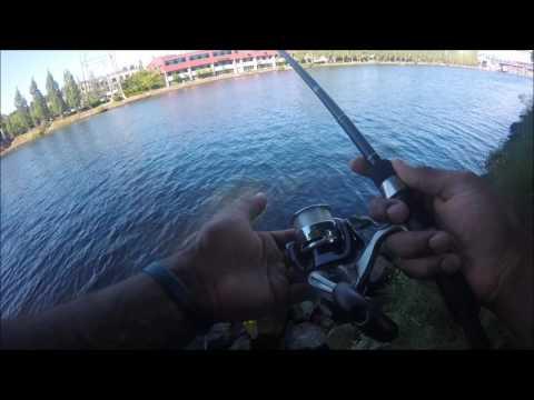 Lake Union Smallmouth Bass Fishing