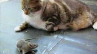 Mouse scares cat