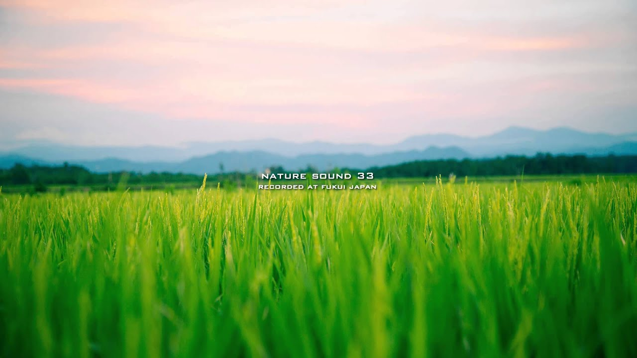 Nature Sound 33 - SINGING OF INSECTS / THE MOST RELAXING SOUNDS -