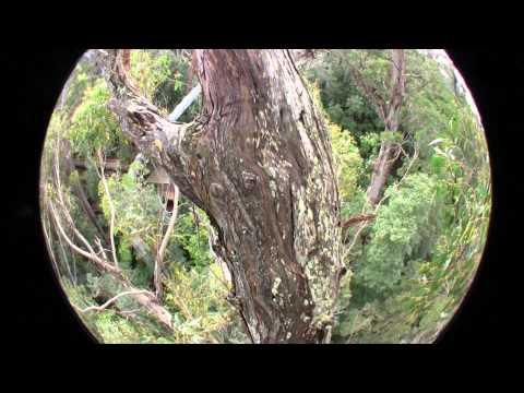 Defect Tree Three