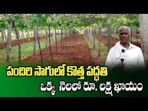 High Profits Of Vegetables Cultivation Through Pendal System | Ridge Gourd Farming | SumanTV Rythu