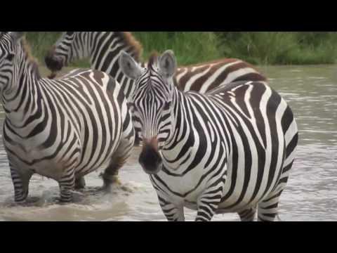 3 years in Tanzania - Travel video