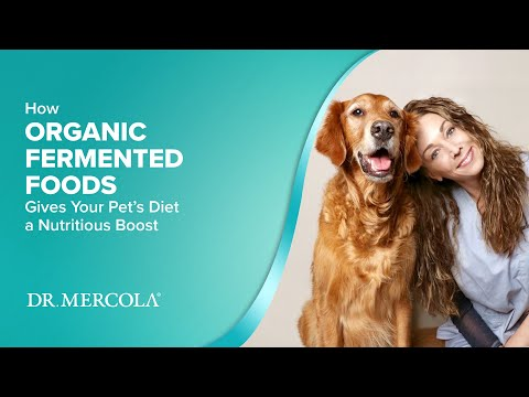 How ORGANIC FERMENTED FOODS Gives Your Pet's Diet a Nutritious Boost