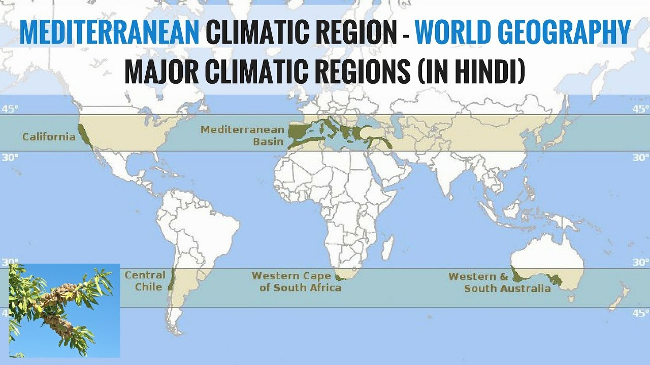 Mediterranean Climate Region - World Geography Major Climatic ...