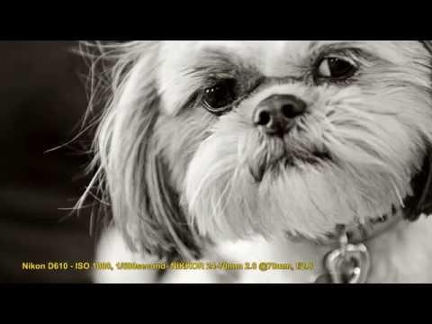 El reto de la fotografía de niños y mascotas a través de la cámara de Tamara Lackey