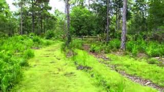 США. О ПРИРОДЕ и ЖИВНОСТИ во Флориде, Прогулка по ПАРКУ Tibet-Butler Preserve Орландо! Часть 2