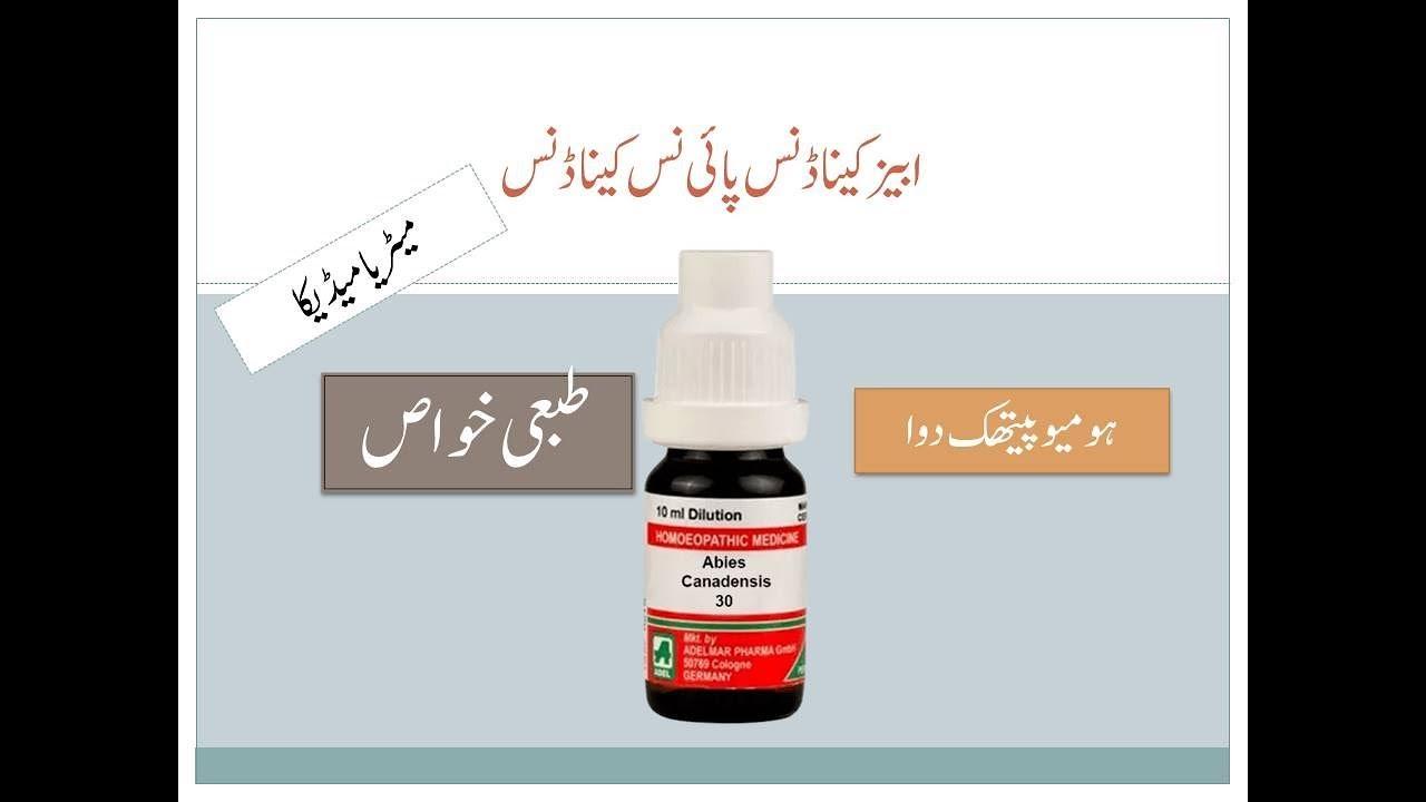 Abies Canadensis Uses Online Materia Medica Urdu Youtube