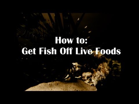 How To: Get Fish Off Live Foods