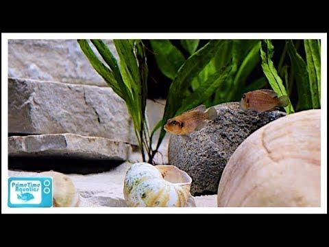 New 125 Gallon Lake Tanganyika Fish Tank: My Favorite Fish Tank!!
