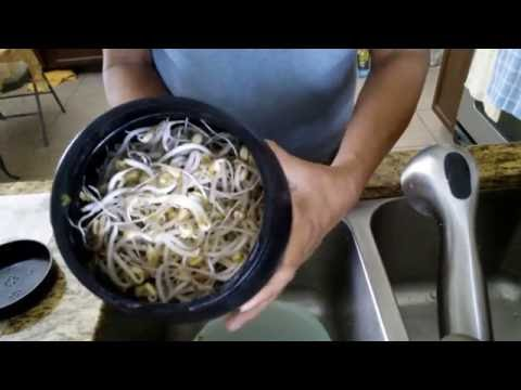 How To Grow Bean Sprouts Simple And Easy Way Diy At Home Fl