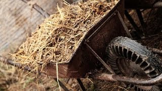 Using Animal Manure in Your Garden