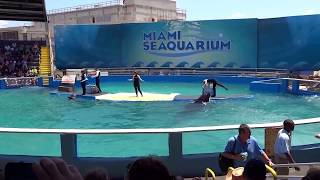 Video Completo Sea Aquarium Miami Florida Abril 2013