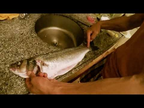 AHMET MADEN Zıpkınla Levrek Avı Ve ızgara Spearfishing