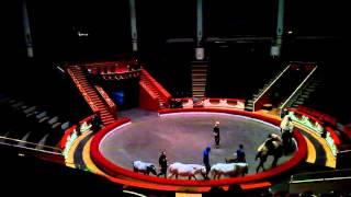 Репетиция верблюдов в цирке на Цветном(, 2016-04-01T11:50:26.000Z)