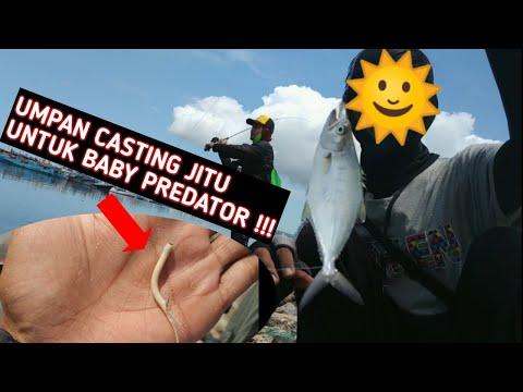 Mancing Casting Dengan Umpan Karet Pentil Di Pelabuha Benoa Bali   Ep 19