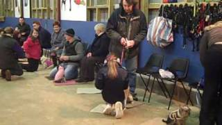 Dogs Trust Bridgend: Training Classes At The Centre