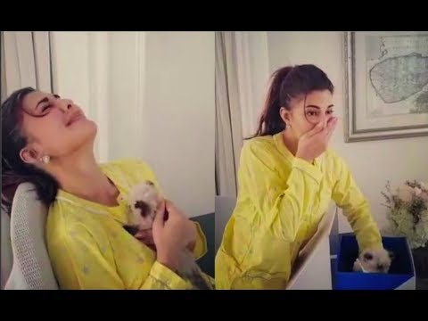 Jacqueline Fernandez Crying After Seeing Christmas Kitten Surprise