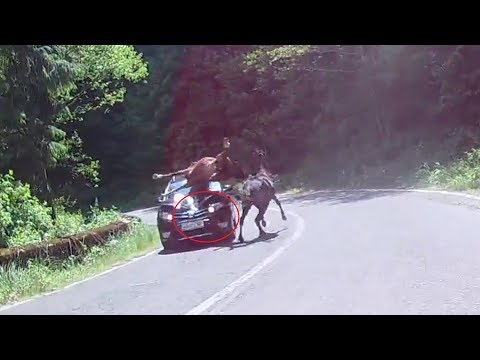 Car accident with horse
