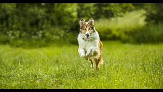 Lassie Torna A Casa | Spot L'amicizia con un cane è per sempre HD