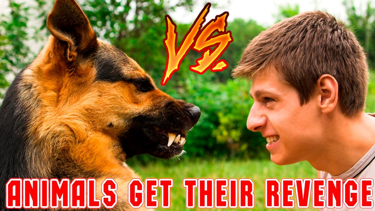 Download Funny Animals Get Their Revenge Part 3 - Animals vs People - Funny Animals