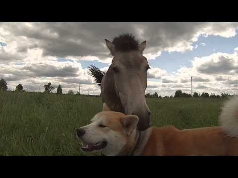 Horse And Dog Are Best Friends