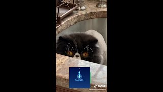FUNNY THINGS CATS DO - ADORABLE AND CUTE CATS DOING HILARIOUS STUFF [VIDEO COMPILATION]