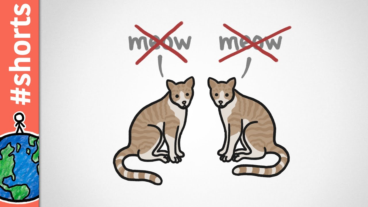 Adult Cats Only Meow At Humans #shorts