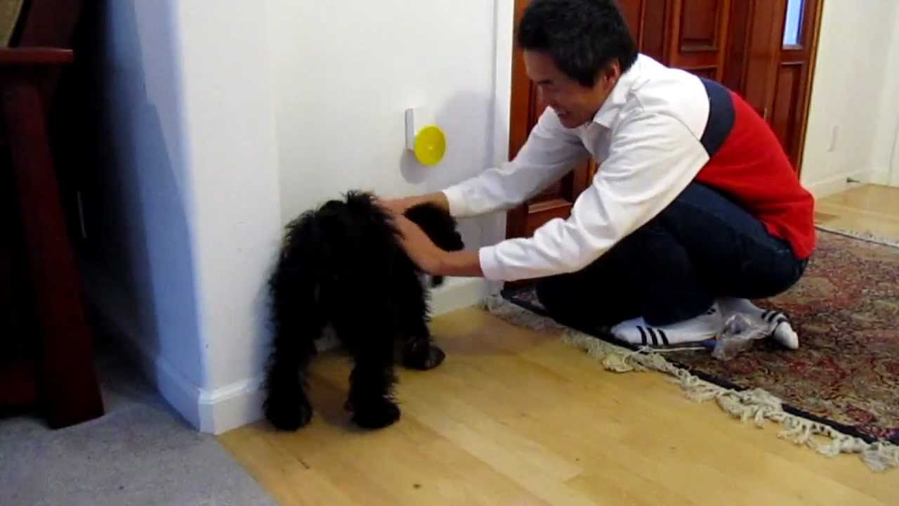 Training Molli On Pebble Smart Doggie Doorbell Youtube