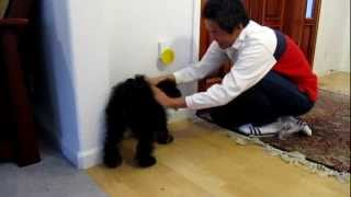 Training Molli On Pebble Smart Doggie Doorbell