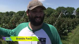 Colonial Gardens - One Large Berry Patch