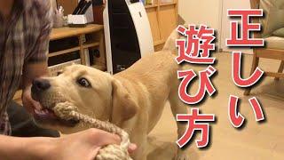 愛犬と一緒にロープなどの引っ張りっこをする時の遊び方を記載しました...