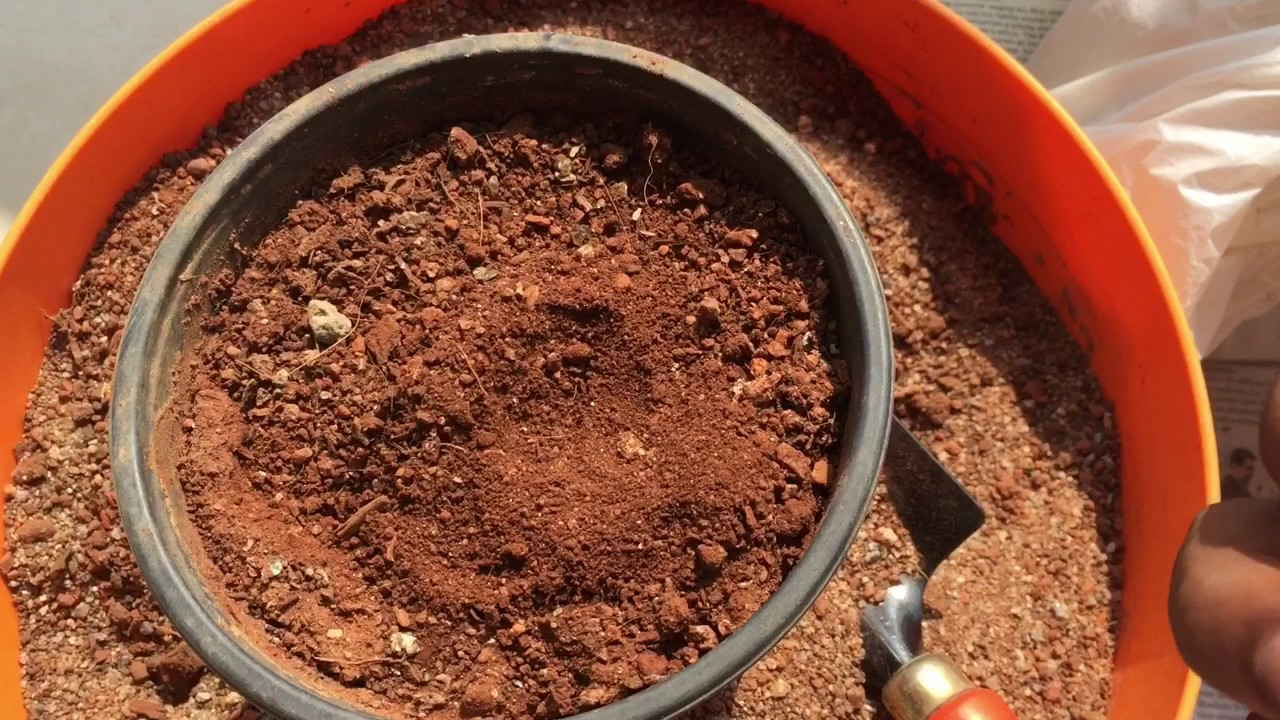 Soil mix for adeniums youtube for What is soil a mixture of