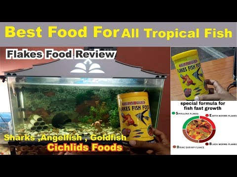 Feeding Fish: Flakes Or Pellets? Tropical Crisps Fish Food Review Best Food For Cichlids